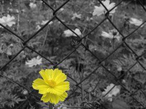 clôture printemps